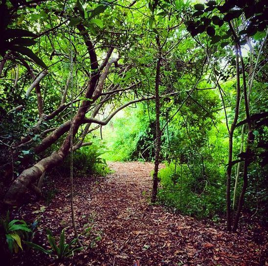 Kirstenbosch #CPTBucketList